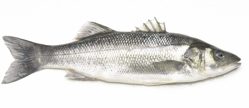 hoe vis je op zeebaars